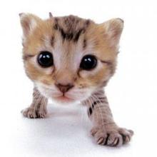 trop mimi les chats - Dessin - Dessins et images des membres de Jedessine - Images