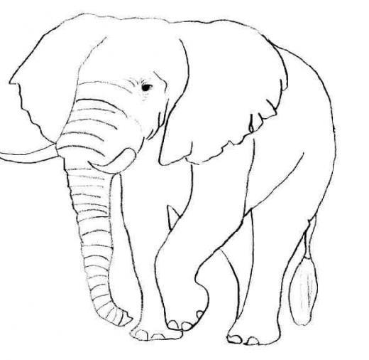 Savane africaine animaux - Animaux d afrique coloriage ...