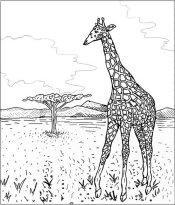 Coloriage d'animaux d'Afrique
