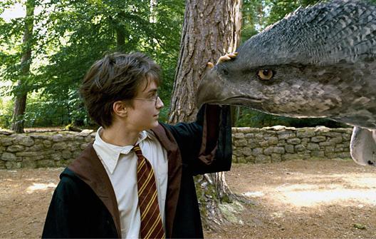 Videos Pour Enfants De Liste De Creatures Fantastiques Dans Harry