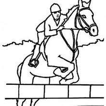 chevaux - Coloriage - Coloriage GRATUIT - Coloriage GRATUIT des membres de Jedessine