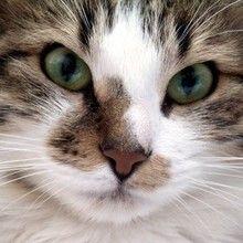 chats - Dessin - Dessins et images des membres de Jedessine - Images
