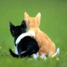 J'adore Les Chatons!!! - Dessin - Dessins et images des membres de Jedessine - Images