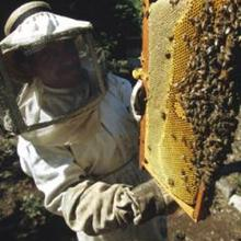L'apiculture - Lecture - REPORTAGES pour enfant - Divers