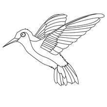 Coloriage d'un colibri