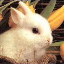 Le lapin domestique - Lecture - REPORTAGES pour enfant - Fiches pédagogiques sur les animaux