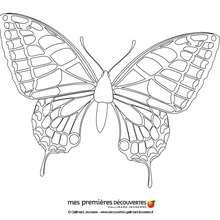 Coloriage d'un papillon - Coloriage - Coloriage PERSONNAGE BD - Coloriages Mes premières découvertes