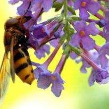 Reportage : Les abeilles
