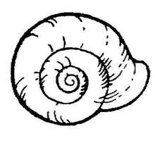 Coloriage d'un escargot - Coloriage - Coloriage ANIMAUX - Coloriage ANIMAUX MARINS - Coloriage ESCARGOT