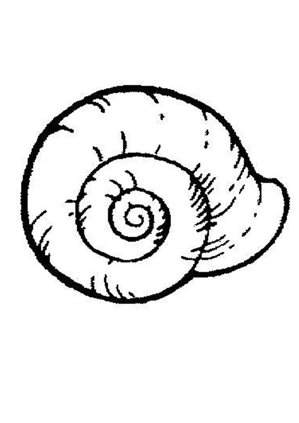 Coloriages coquille d 39 escargot - Escargot dessin ...