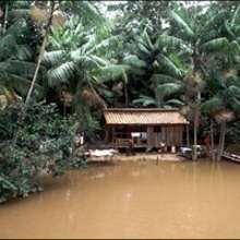 La forêt d'Amazonie - Lecture - REPORTAGES pour enfant - Fiches pédagogiques sur les animaux