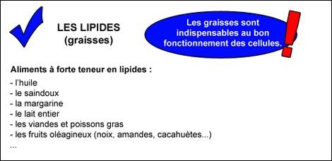 lipides2
