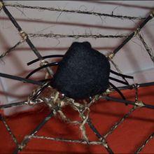 Activité : Les araignées