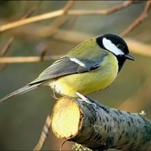 Les petits oiseaux. - Lecture - REPORTAGES pour enfant - Fiches pédagogiques sur les animaux