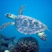 La Tortue de Mer - Lecture - REPORTAGES pour enfant - Fiches pédagogiques sur les animaux