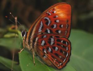 de-la-chenille-au-papillon