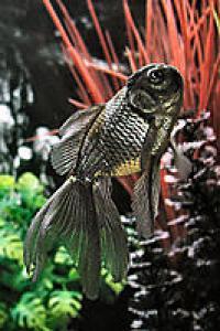 les-poissons-rouges-et-ton-aquarium