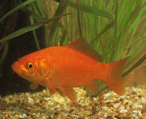 Contes pour enfants les poissons rouges et ton aquarium for Pompe pour petit aquarium poisson rouge