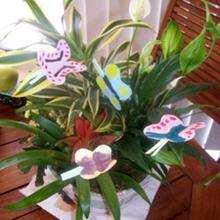 La plante à papillons