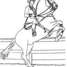 Cavalière et sa monture