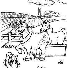 Coloriage : Chevaux de ferme