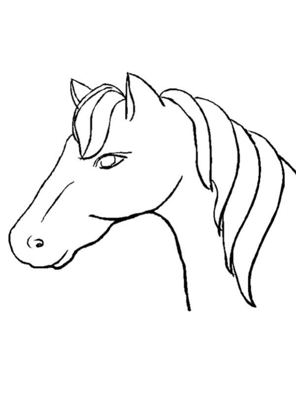 Coloriage : Buste de cheval