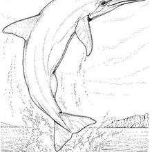 Coloriage de dauphin - Coloriage - Coloriage ANIMAUX - Coloriage ANIMAUX MARINS - Coloriage DAUPHIN