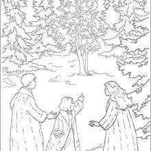 La forêt des elfes