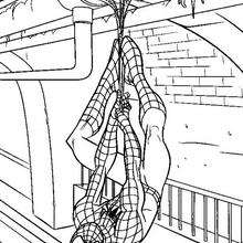Coloriage : Spiderman à l'envers
