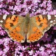 Reportage : De la chenille au papillon