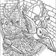 Coloriage Harry Potter : Les chouettes distribuent le courrier