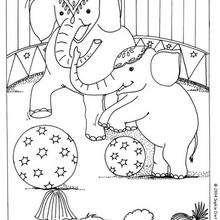 Coloriage d'éléphants - Coloriage - Coloriage GRATUIT - Coloriage GRATUIT CIRQUE - Coloriage ANIMAUX CIRQUE