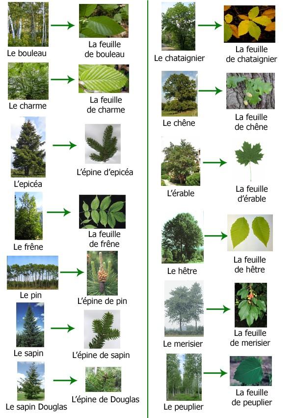 Contes pour enfants feuilles et arbres de la forêt à lire - fr ...