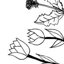 Coloriage de tulipes - Coloriage - Coloriage NATURE - Coloriage FLEUR - Coloriage TULIPE