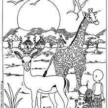 Coloriage d'une girafe - Coloriage - Coloriage ANIMAUX - Coloriage ANIMAUX AFRIQUE - Coloriage GIRAFE