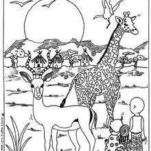 Girafe d'Afrique