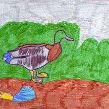 Le canard - Dessin - Dessin ANIMAUX - Dessin ANIMAUX DE LA FERME - Dessin CANARD