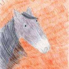 Le cheval au soleil