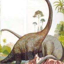 Le Diplodocus - Lecture - REPORTAGES pour enfant - Fiches pédagogiques sur les animaux