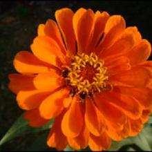 Le langage des fleurs : R à Z