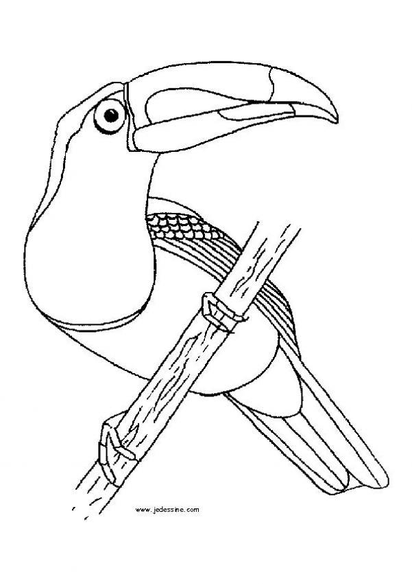 Coloriages coloriage d 39 un toucan - Coloriage toucan a imprimer ...