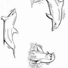 Coloriage de dauphins qui s'amusent - Coloriage - Coloriage ANIMAUX - Coloriage ANIMAUX MARINS - Coloriage DAUPHIN