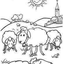 Coloriage de moutons