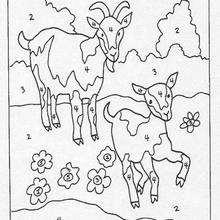 Moutons - Jeux - Jeux de coloriage magique
