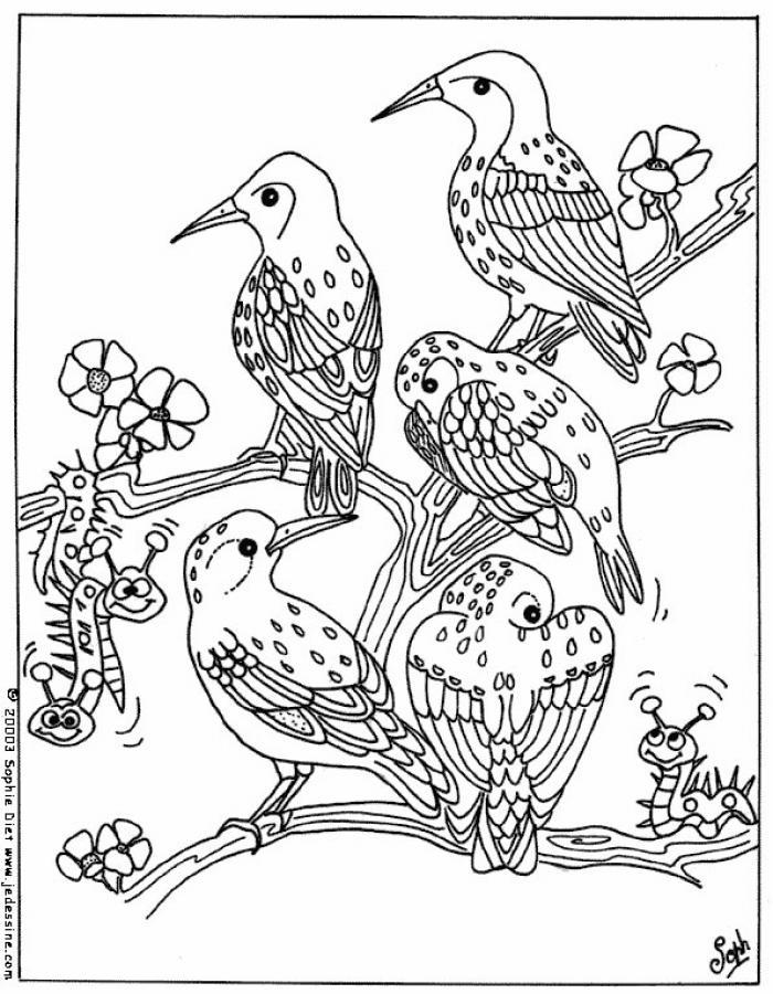 Coloriage d'oiseaux