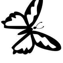 Coloriage d'un papillon N°6 - Coloriage - Coloriage ANIMAUX - Coloriage INSECTE - Coloriage PAPILLON