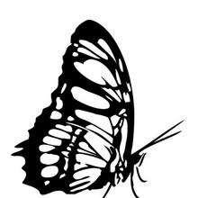 Coloriage d'un papillon N°9 - Coloriage - Coloriage ANIMAUX - Coloriage INSECTE - Coloriage PAPILLON