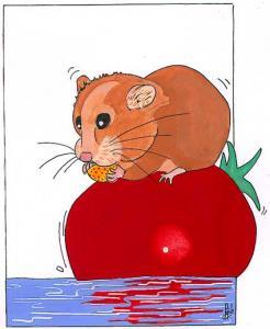 Comment dessiner cochon d 39 inde - Comment dessiner un cochon d inde ...