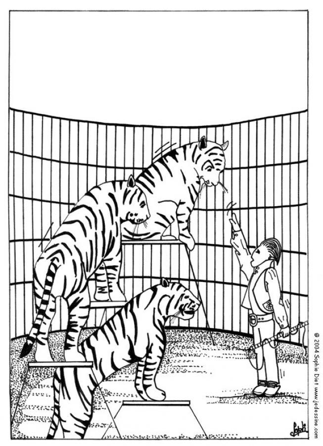 Coloriage de tigres