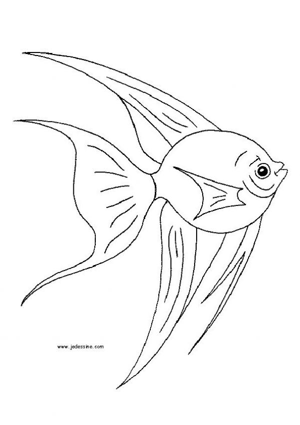 Coloriages coloriage d 39 un poisson - Poisson coloriage ...